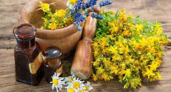 Зверобой - полезные свойства и противопоказания, рецепты