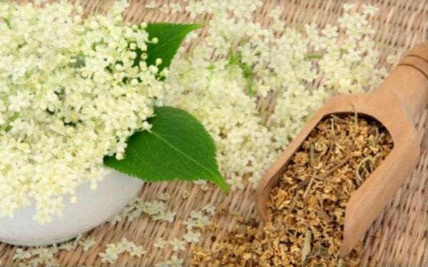 Трава лабазник лечебные свойства и противопоказания
