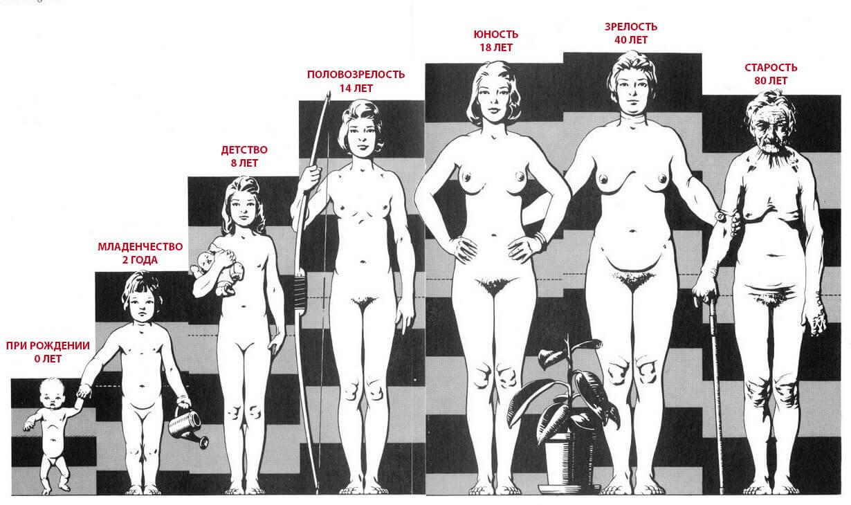 Пропорции женского тела в разном возрасте